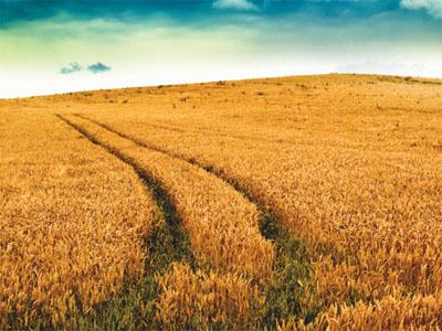 La economía sumergida alcanza el 90% en el medio rural