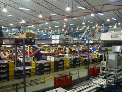El sector alimentación pretende crear 60.000 empleos