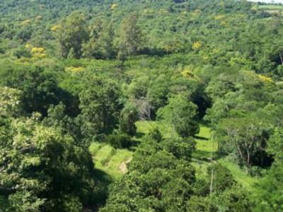 """La expansión de la agricultura deja en """"mínimos"""" los bosques de Paraguay"""