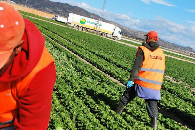 La UE apoya con mayor financiación a los jóvenes agricultores