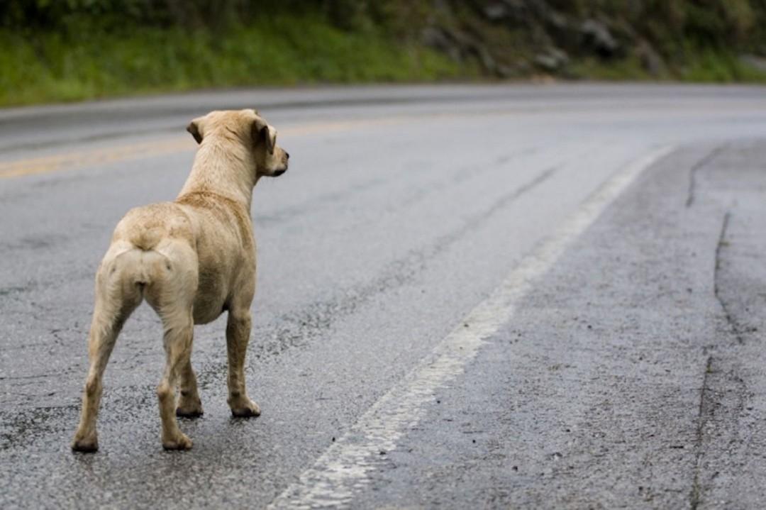 Repsol contra el abandono animal