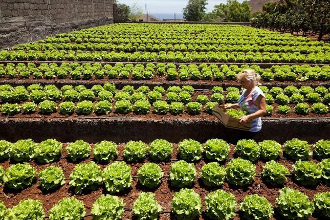 Los aranceles afectarán a 970 millones de euros en exportaciones agrícolas españolas