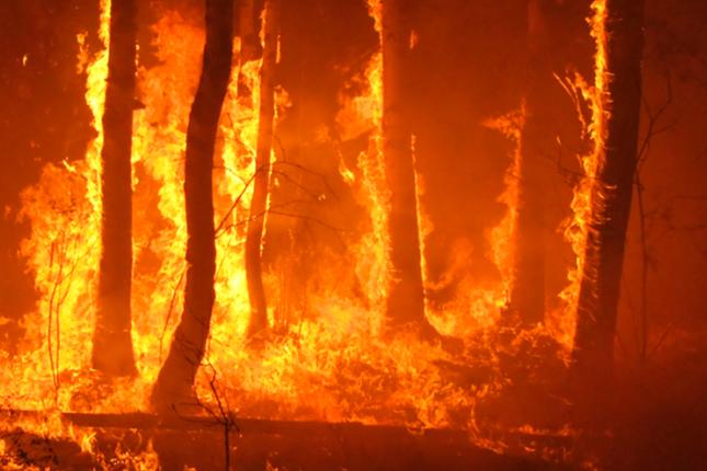 BBVA lanza líneas de financiación para afectados por el fuego en Gran Canaria