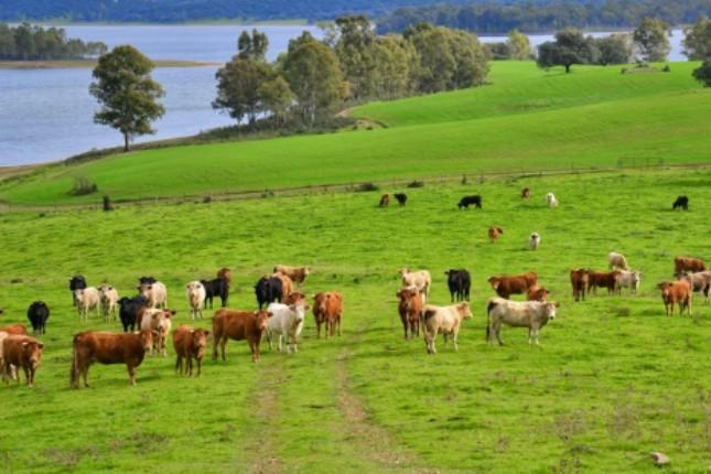 La producción ganadera de carne aporta 14.640 millones a la economía española